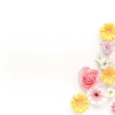 「メッセージが入れやすい花の背景」の写真素材