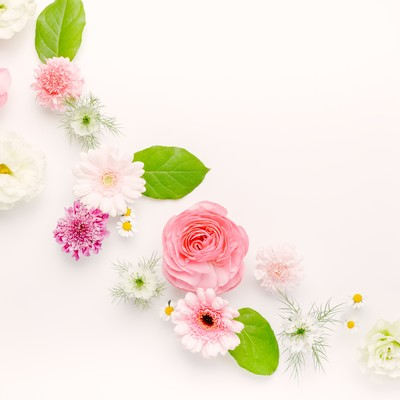 「春色の風(マット)」の写真素材