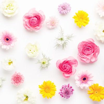 「お花いっぱい春色テクスチャー(マット)」の写真素材