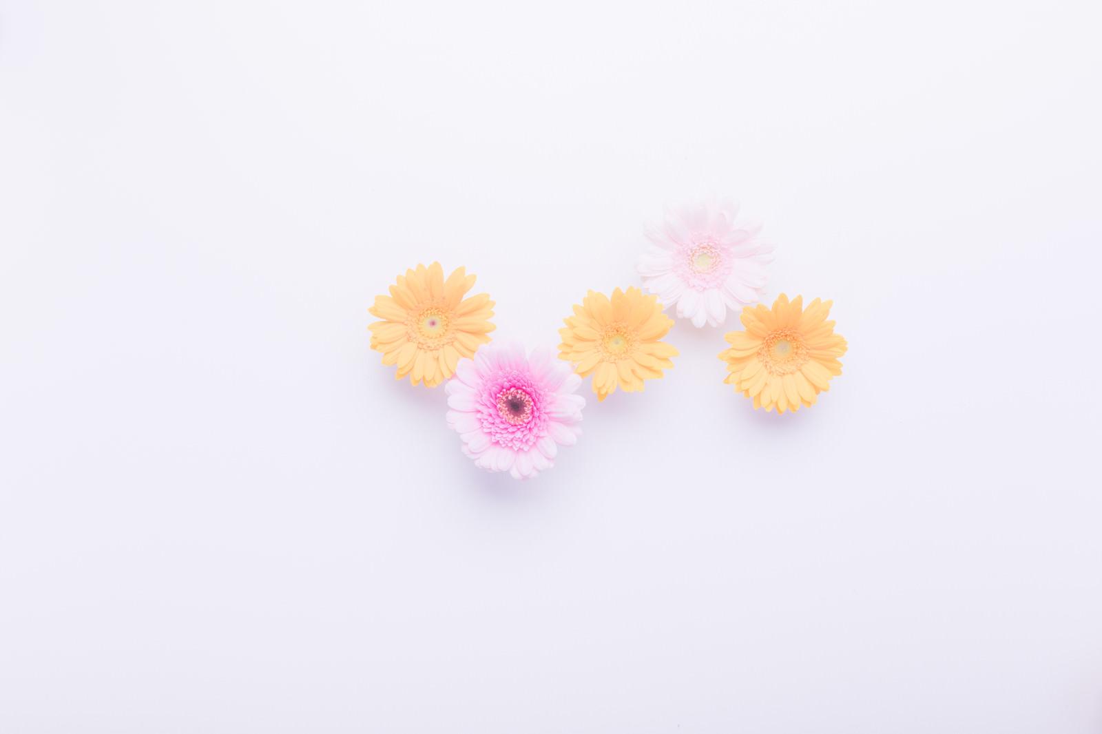 黄色のお花(3つ)|ぱくたそフ...