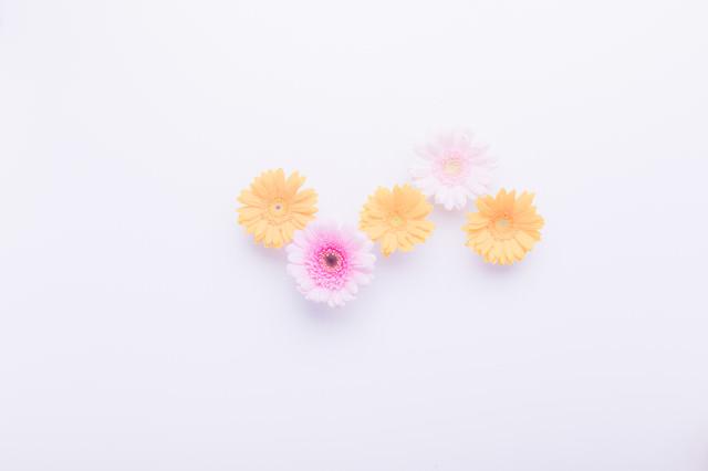 黄色のお花(3つ)の写真