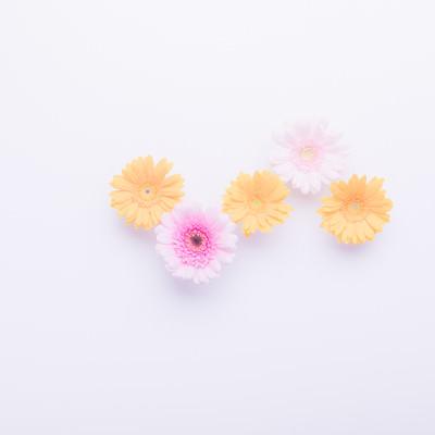 「黄色のお花(3つ)」の写真素材