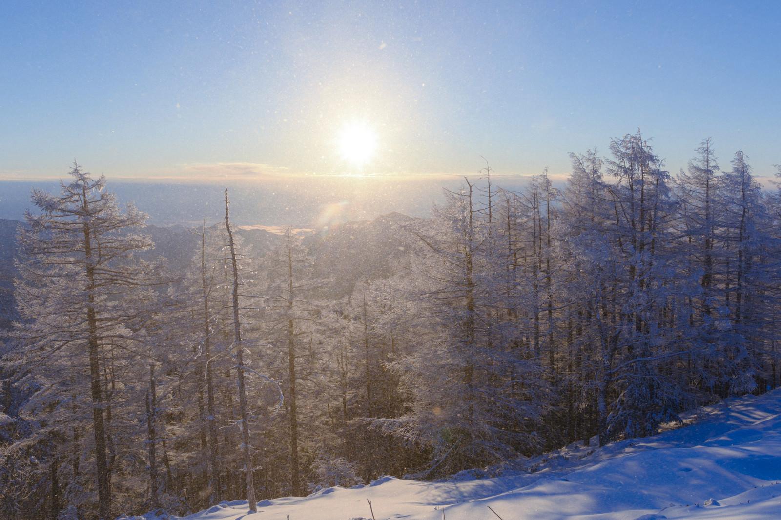 「午前の陽光が差す樹氷林(雲取山)」の写真
