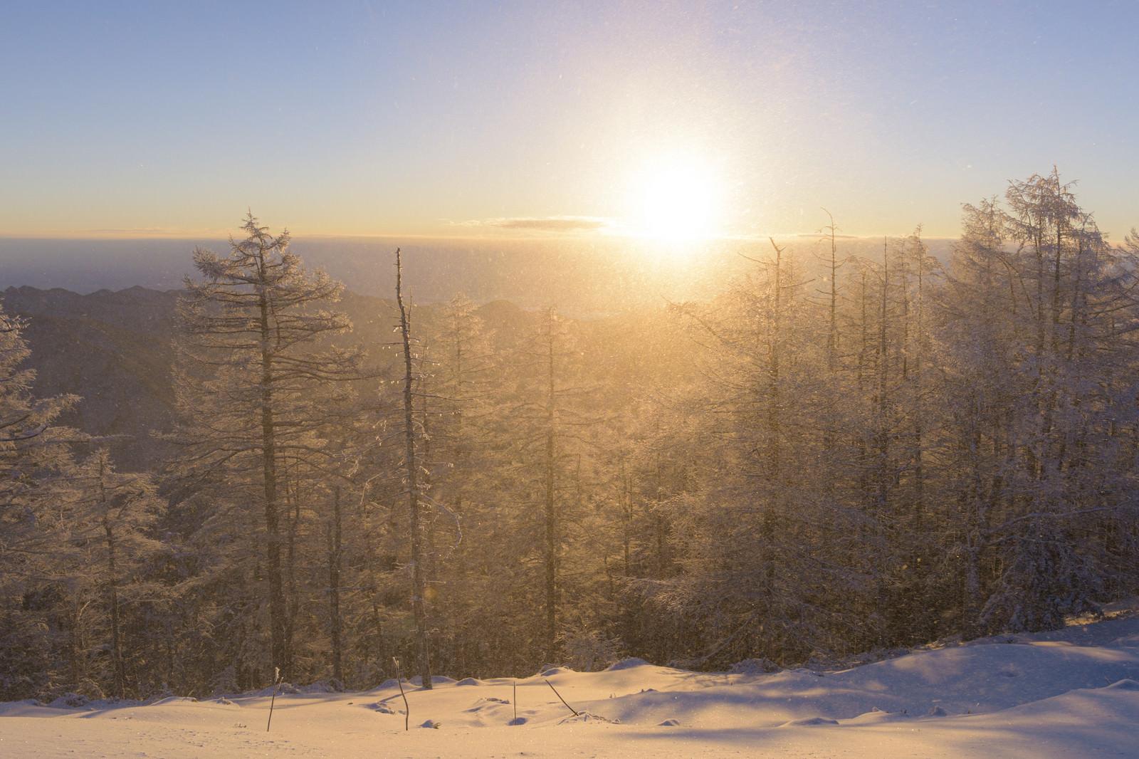 「暖かい光差す雲取山山頂」の写真
