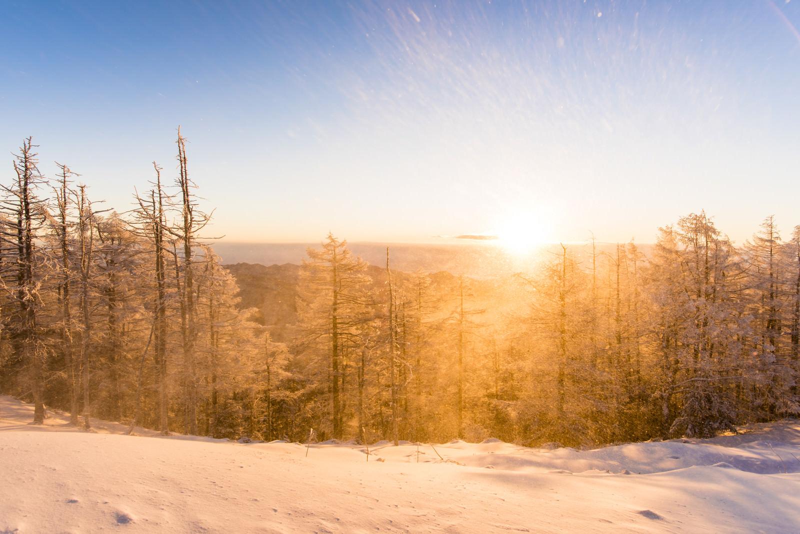 黄金色の朝日と雪景色(雲取山)のフリー素材