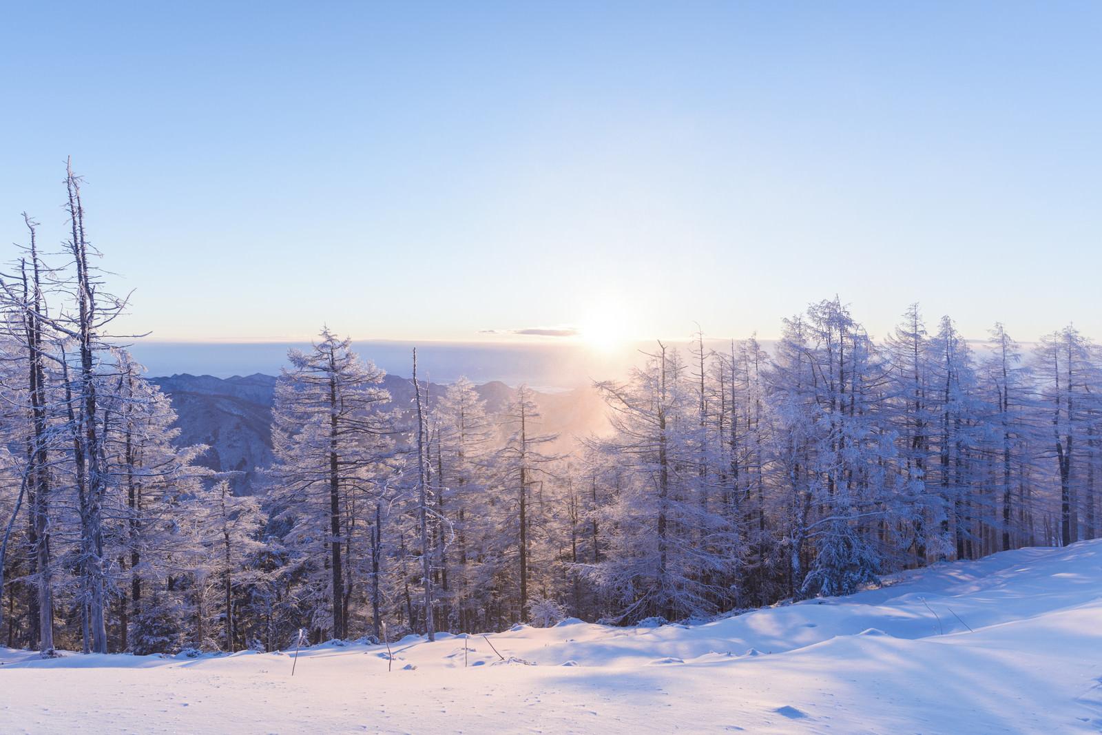 「朝日に照らされる霧氷と雪(雲取山)」の写真