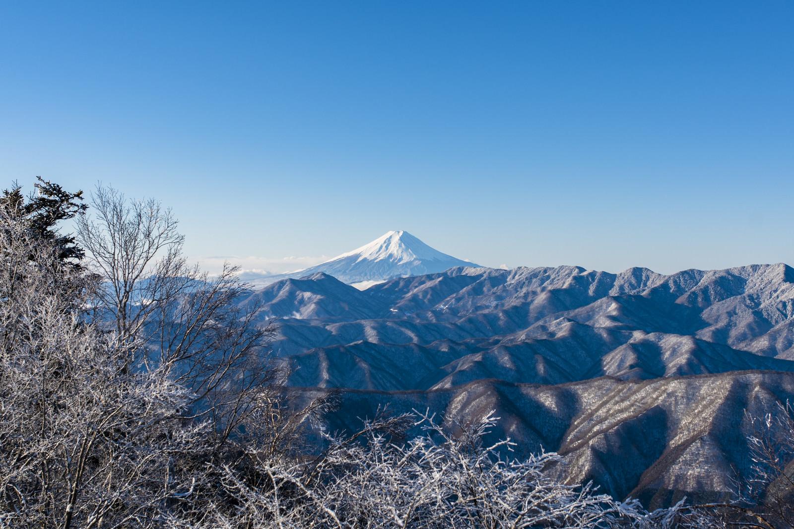 「朝日に輝く富士山(雲取山)」の写真
