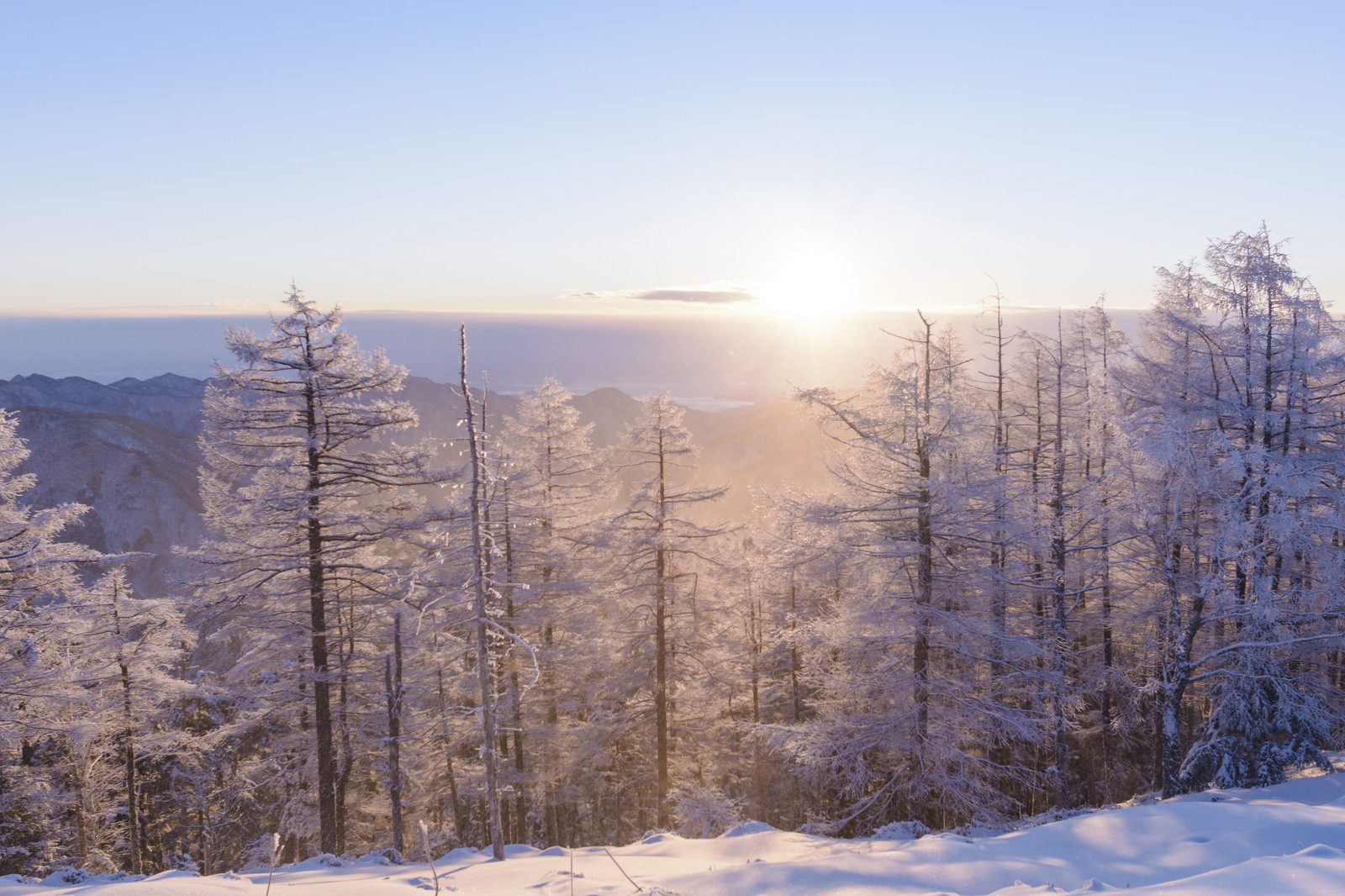 「朝日に輝く霧氷(雲取山)」の写真