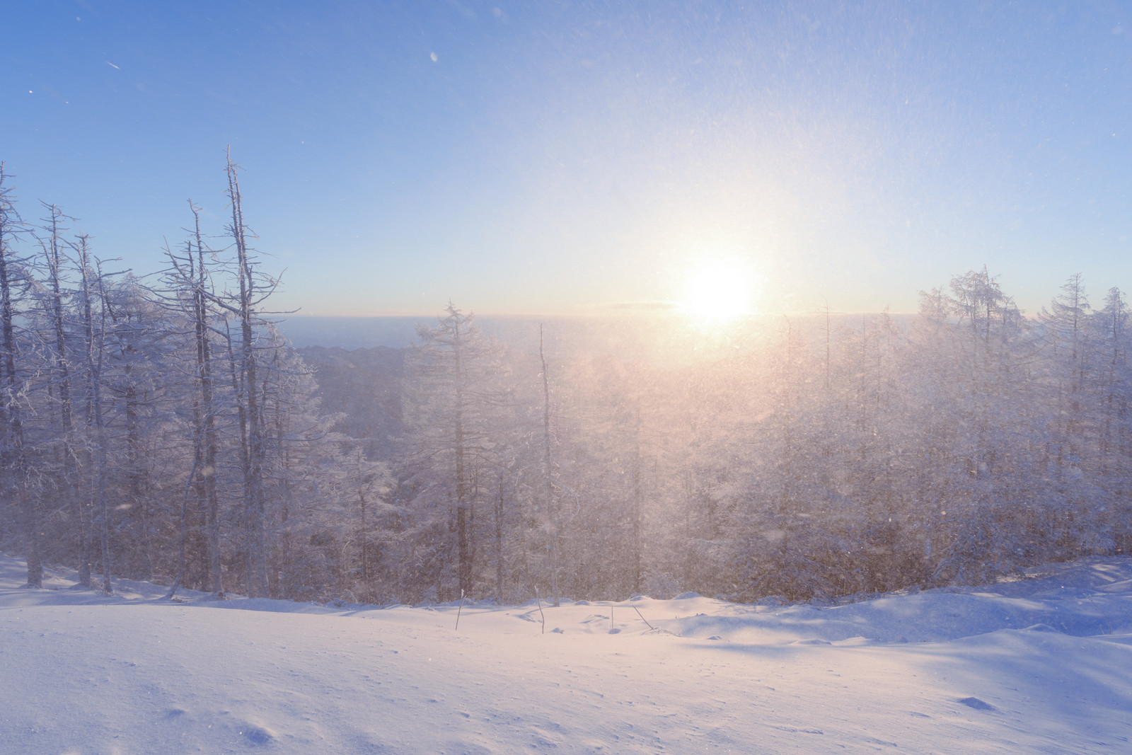 「激しい雪煙と陽光(雲取山)」の写真
