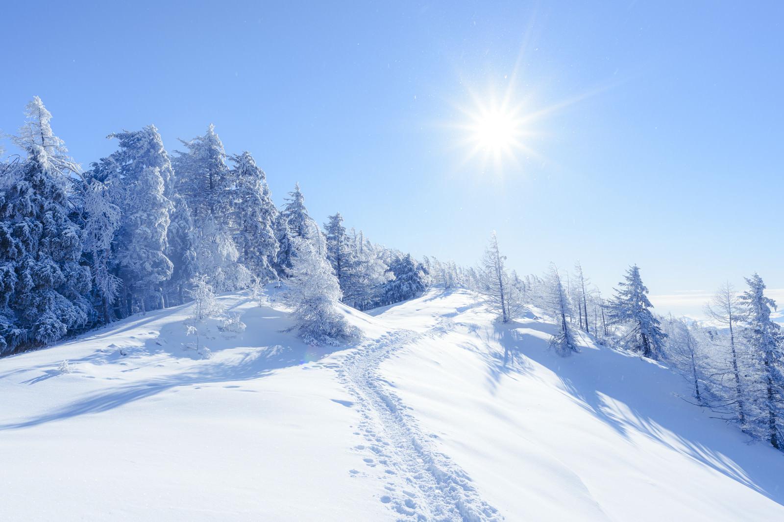 「雪に包まれた雲取山登山道」の写真