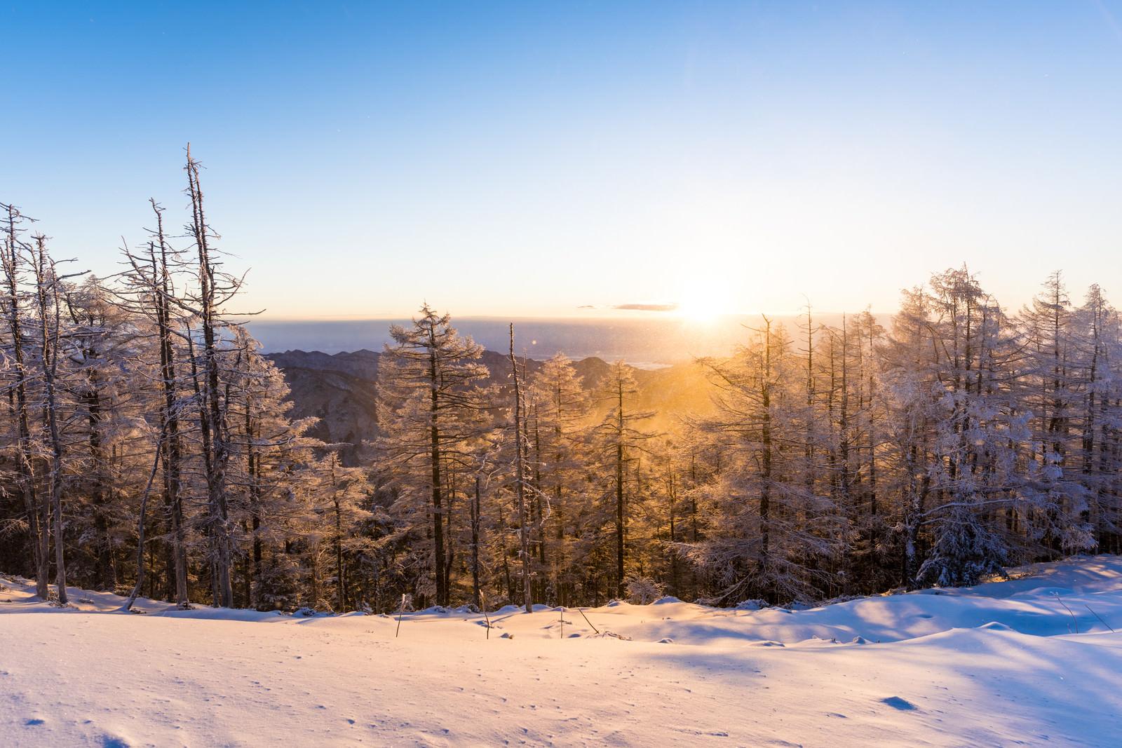 「黄金色の朝日と雪景色(雲取山)」の写真