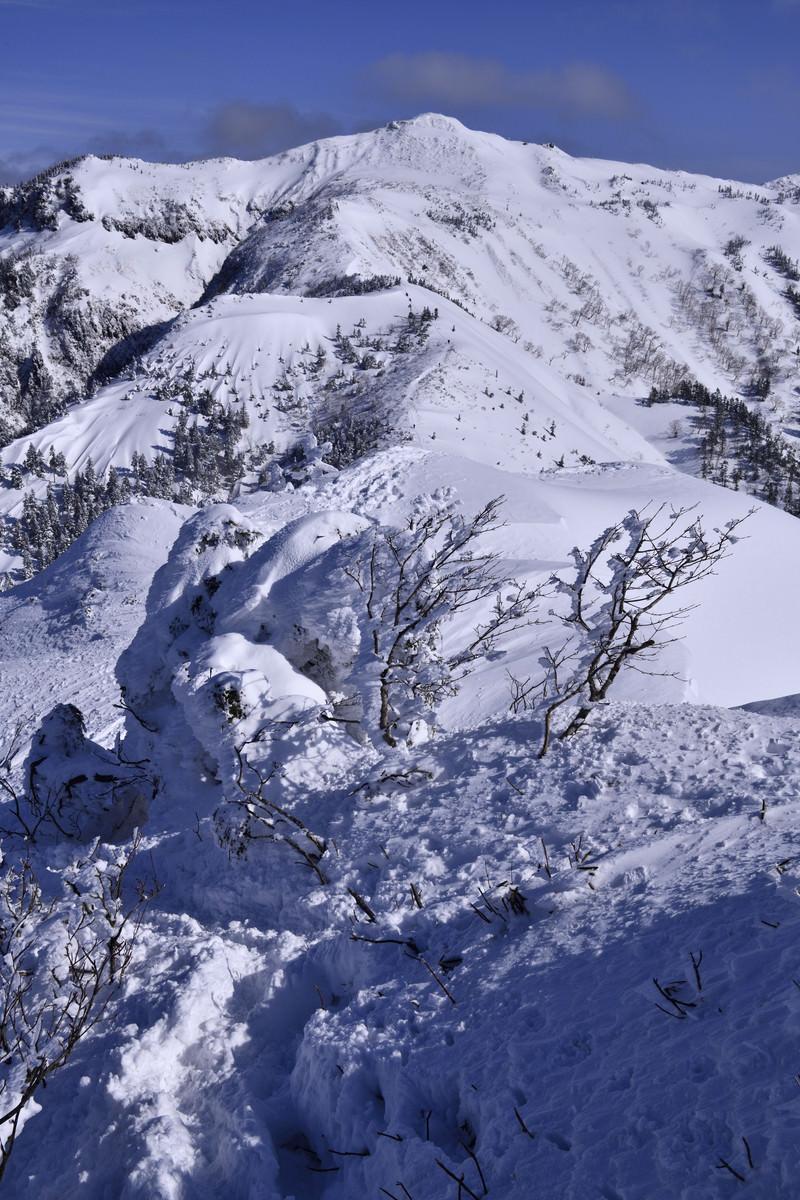 「樹氷と上州武尊山(じょうしゅうほたかやま)」の写真