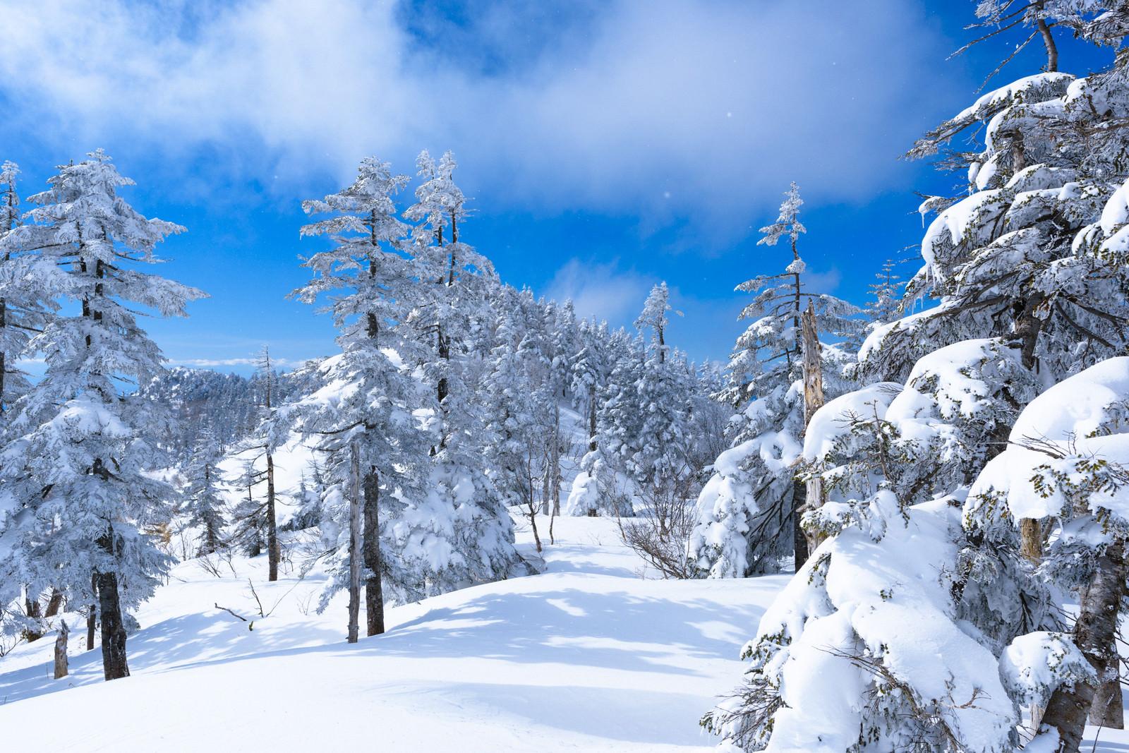 「降雪直後の上州武尊山の森」の写真