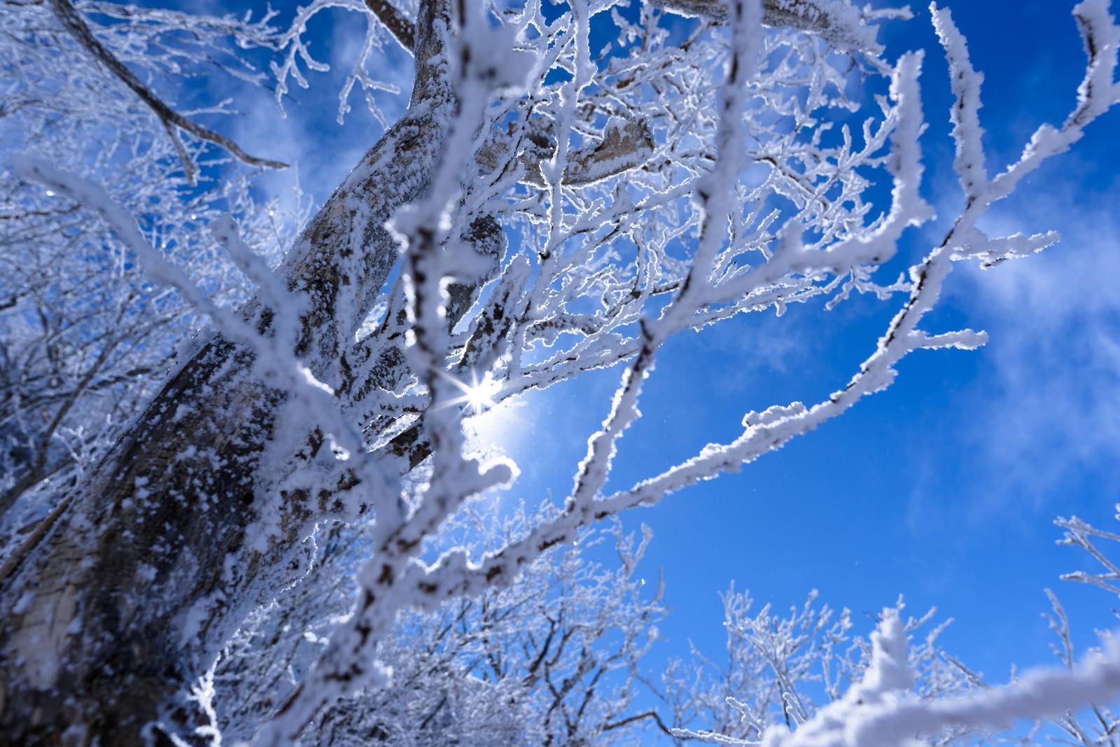 「霧氷に差し込む太陽の光(上州武尊山)」の写真