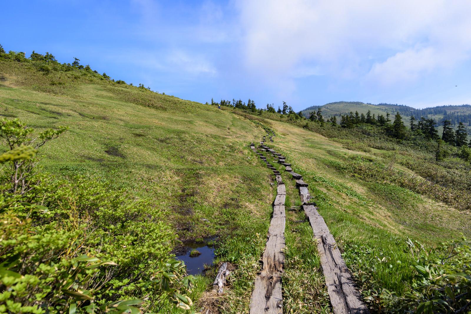 「津駒ヶ岳の山頂へと続く木道」の写真