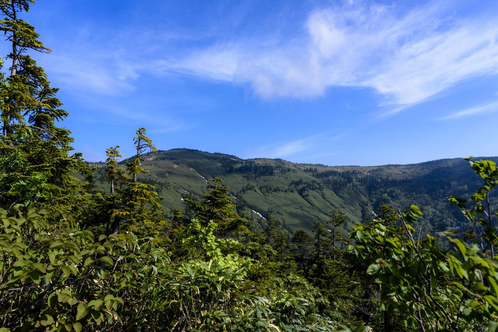 「登山道から見上げる会津駒ヶ岳の山並み」の写真