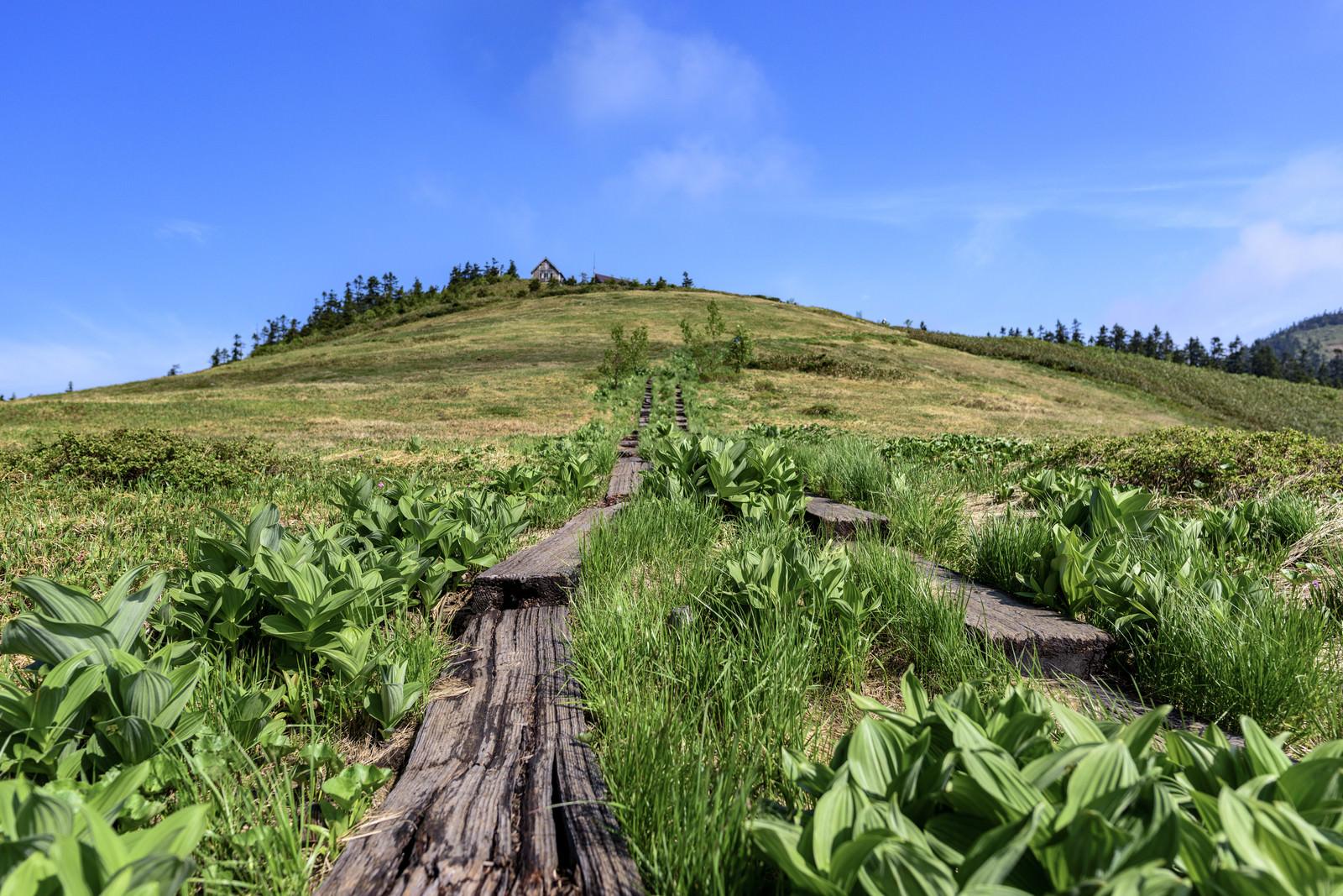 「高層湿原広がる会津駒ヶ岳の木道」の写真