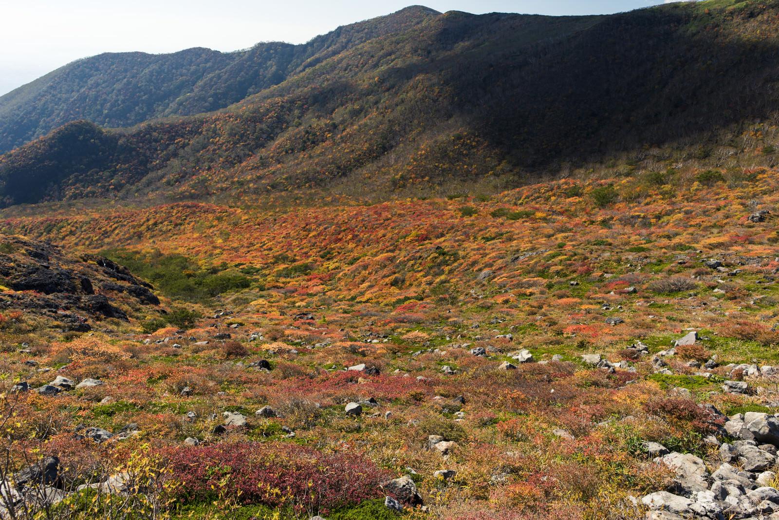 「紅葉に染まる那須茶臼岳中腹(那須岳)」の写真