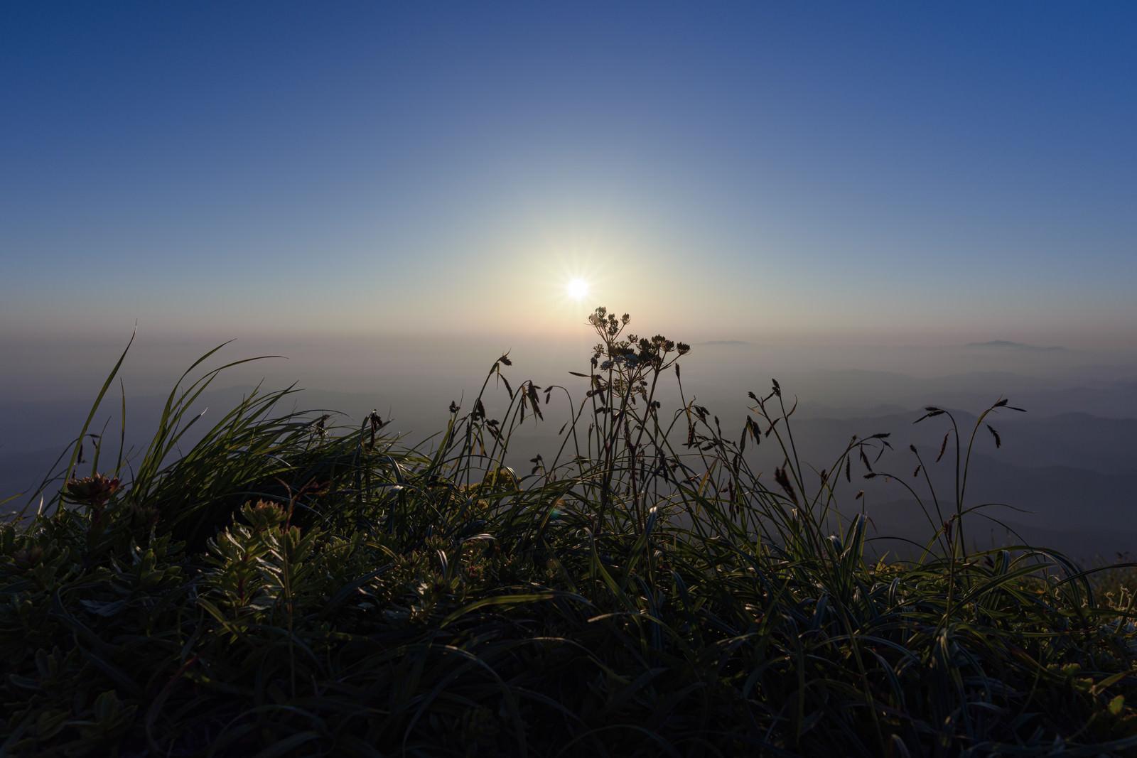 「朝日を待つ草木(鳥海山)」の写真