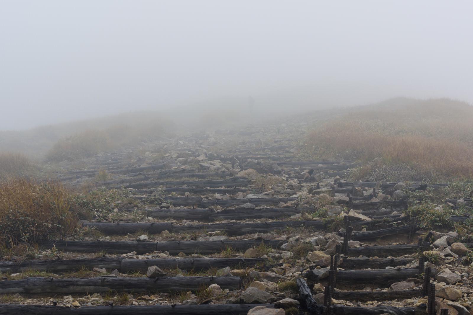 「どこまでも続くような錯覚を覚えるガスの丸太階段(巻機山)」の写真
