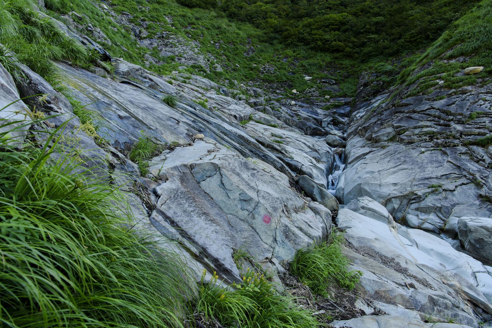 「ヌクビ沢登山道の様子(巻機山)」の写真