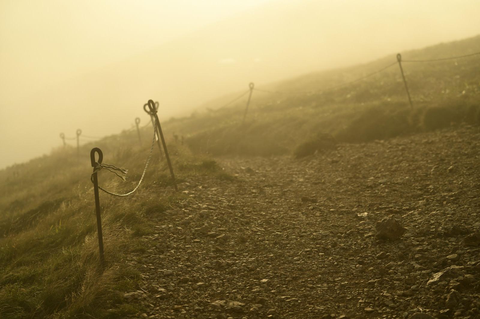 「光があたりを包む登山道(巻機山)」の写真