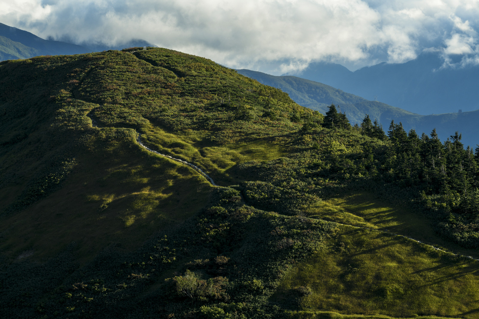 「夕日に色づく牧歌的な登山道(巻機山)」の写真
