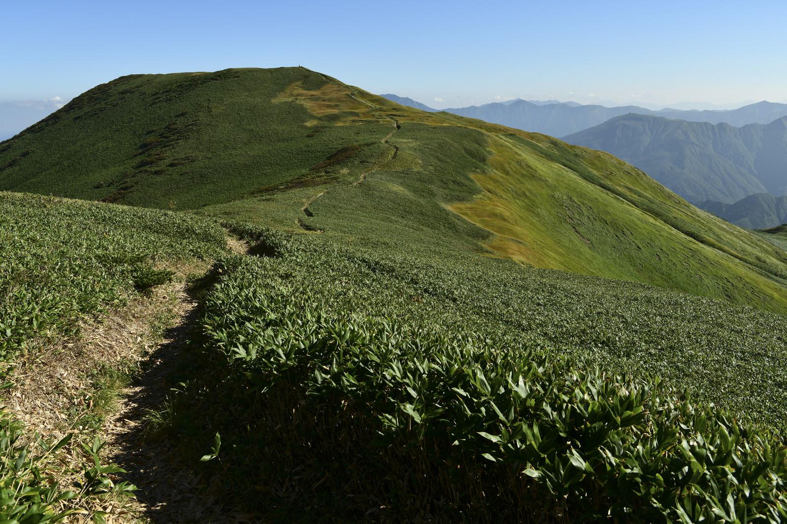 「巻機山から牛ヶ岳へ続く稜線」の写真