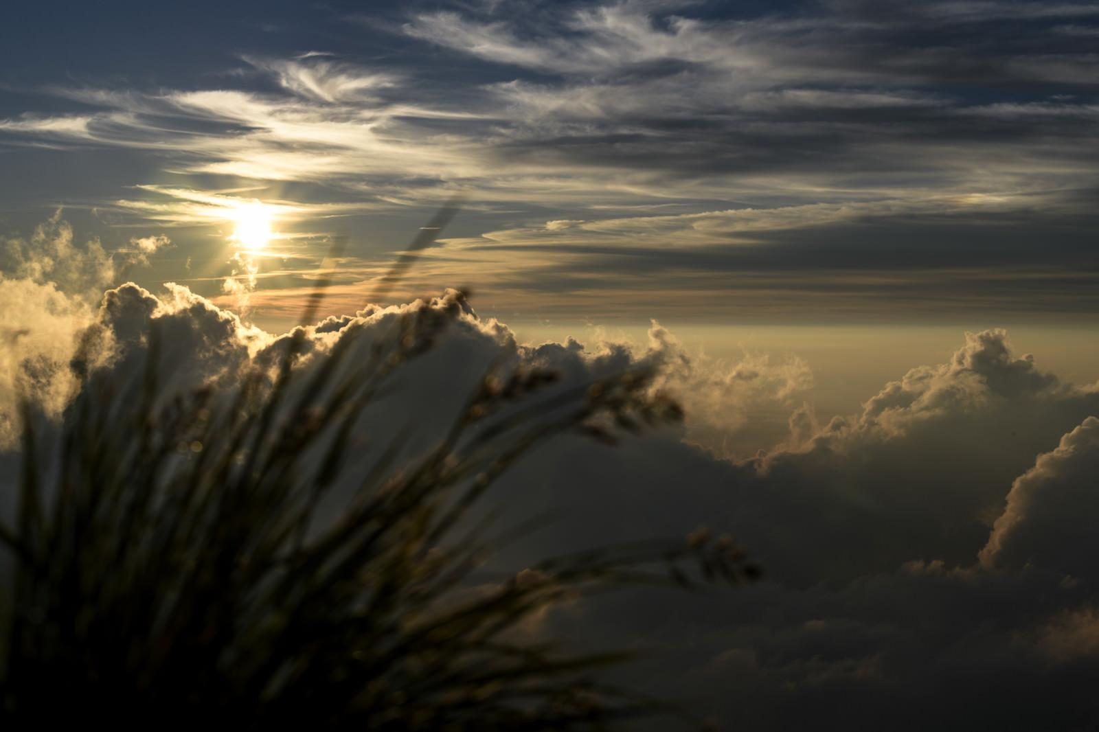 「白馬岳の夕日と山野草」の写真