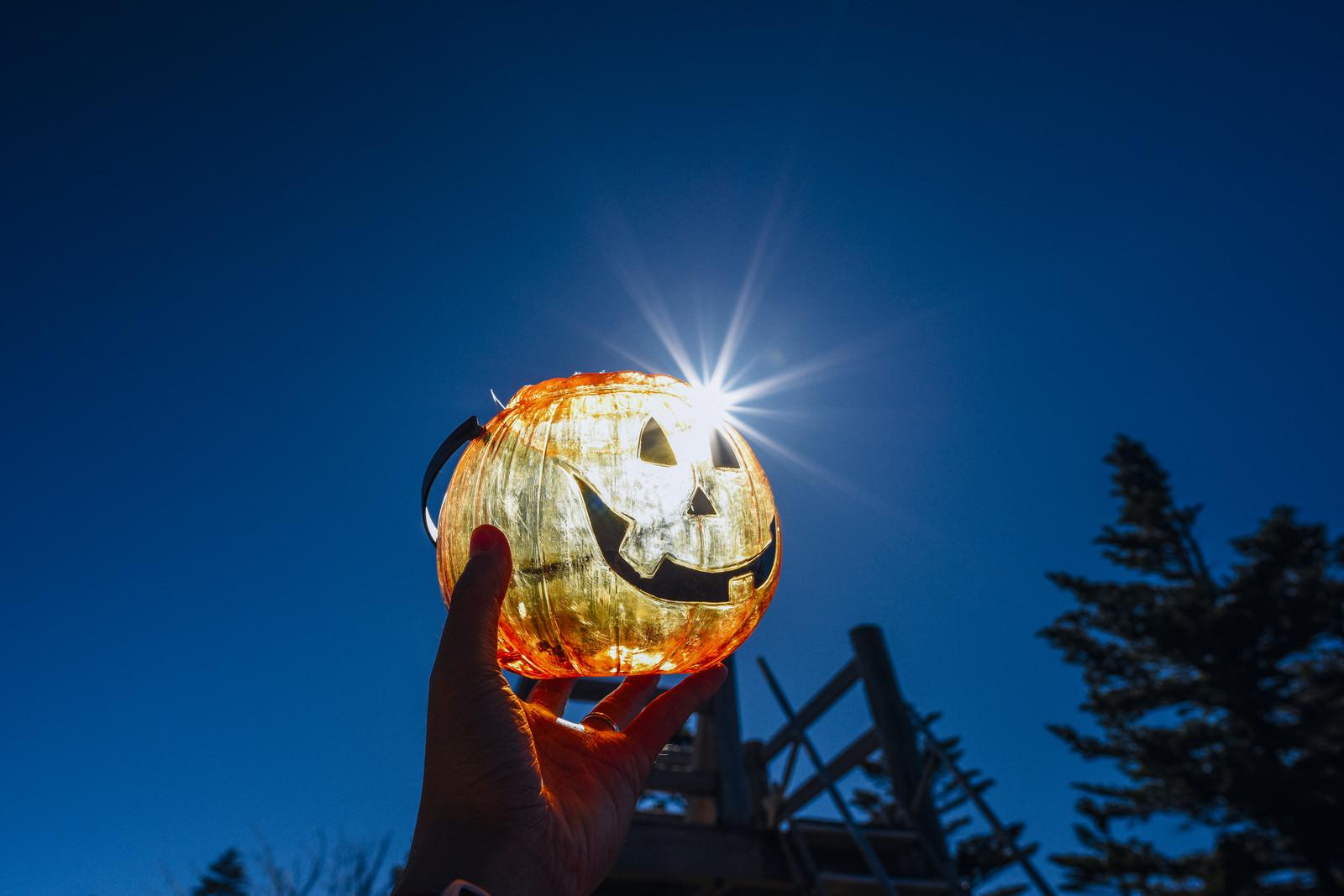 「太陽の光を受けて光るハロウィンカボチャ」の写真