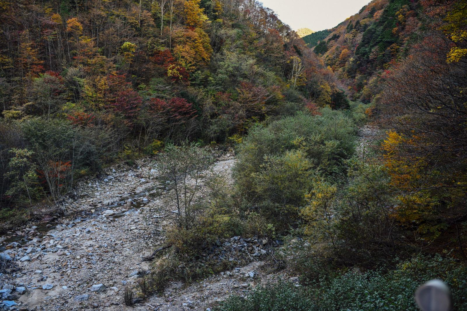 「紅葉の恵那山広河原」の写真