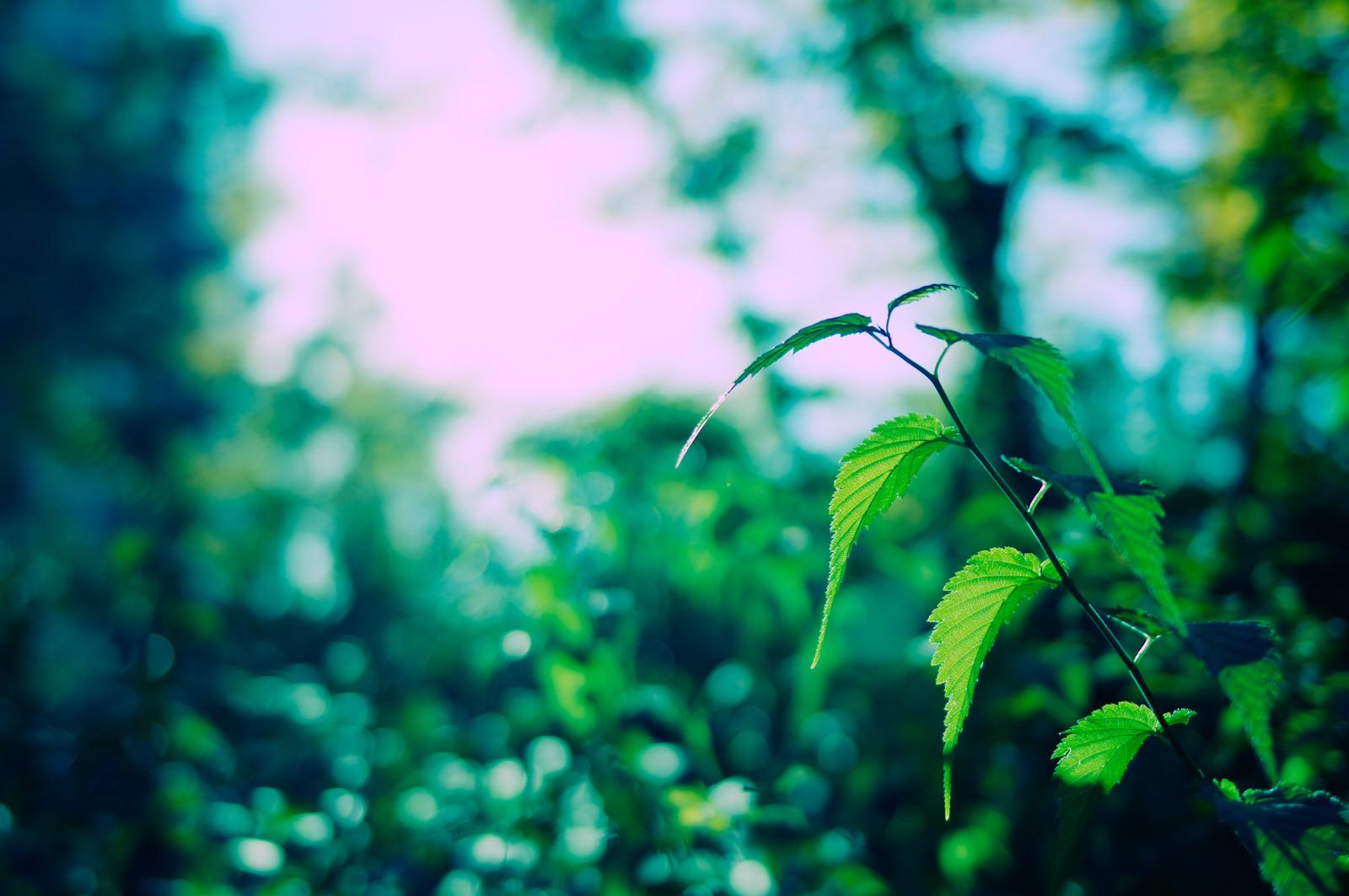草木(イメージ)