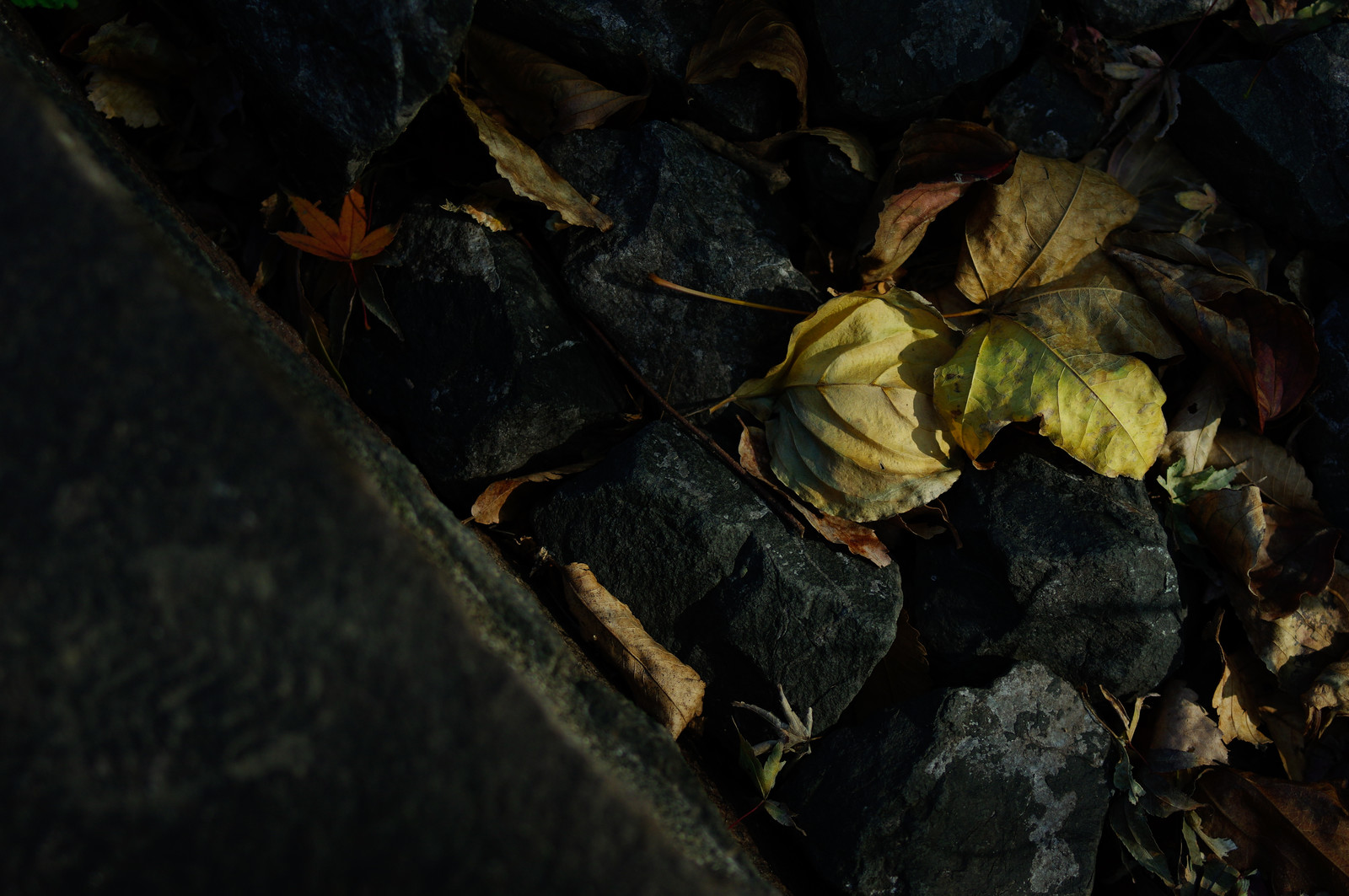 「石の間で朽ちるのを待つ落ち葉」の写真