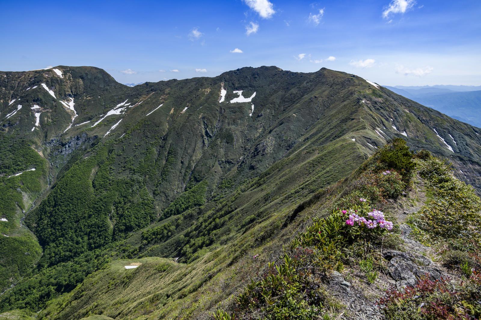 「シャクナゲが咲く登山道と稜線(谷川岳)」の写真