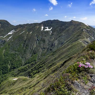 シャクナゲが咲く登山道と稜線(谷川岳)の写真