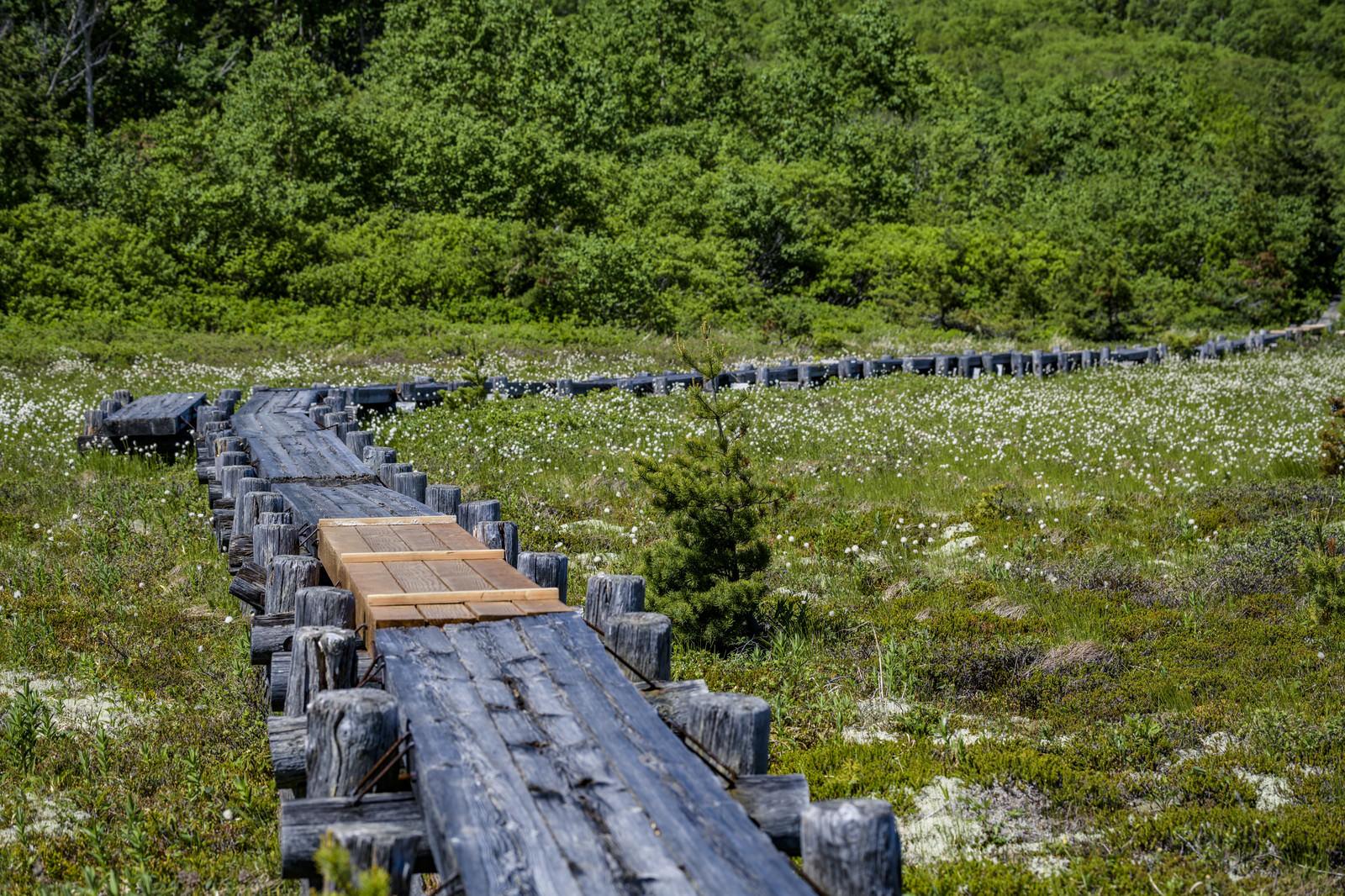 「浄土平にかかる一部改修された木道(吾妻連峰)」の写真