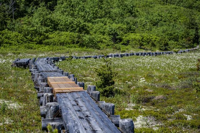 浄土平にかかる一部改修された木道(吾妻連峰)の写真