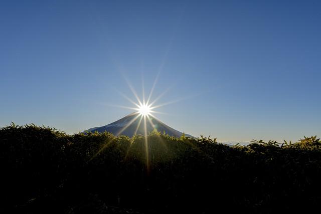 笹藪から見るダイヤモンド富士(竜ヶ岳)の写真