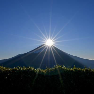 笹藪越しのダイヤモンド富士(竜ヶ岳)の写真