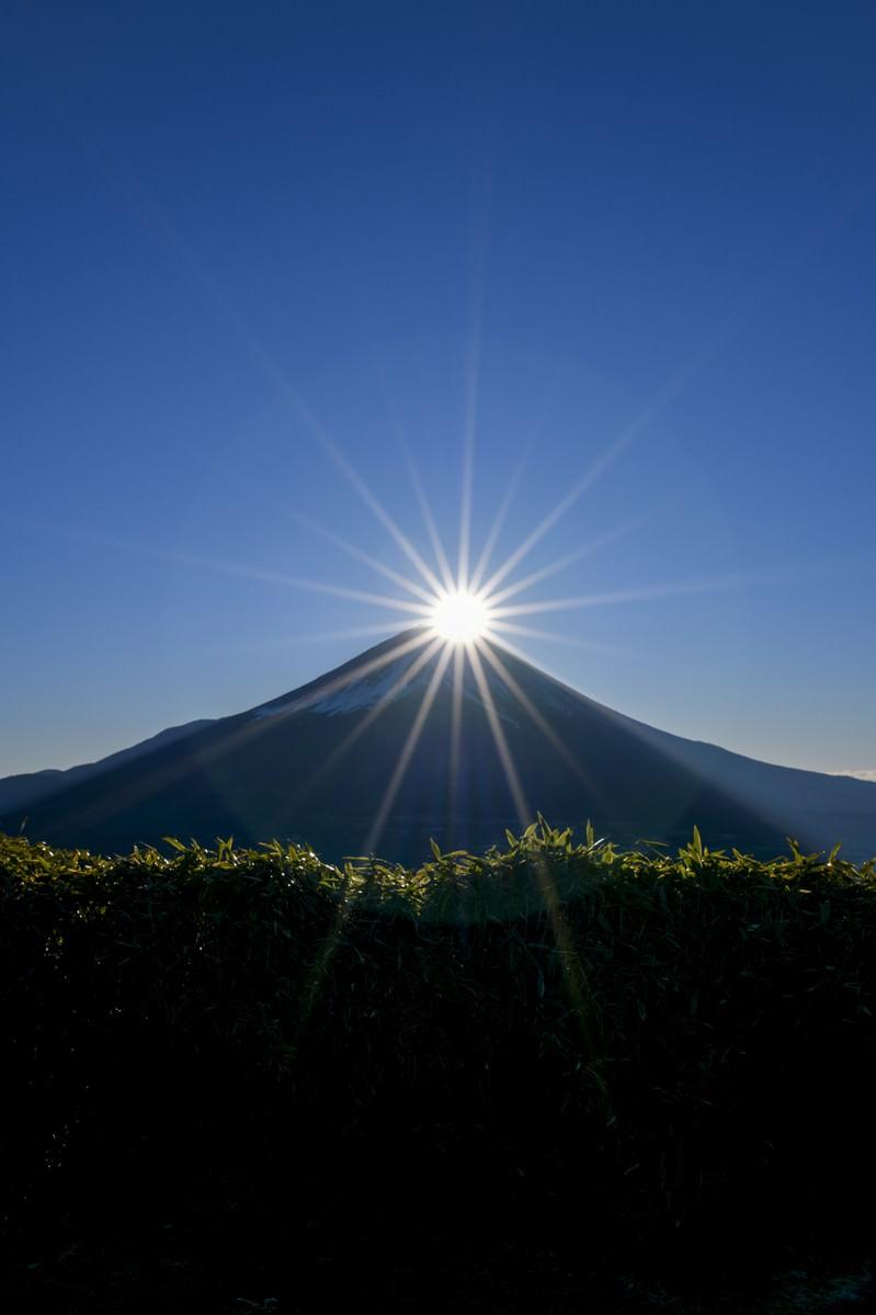 「笹藪越しのダイヤモンド富士(竜ヶ岳)」の写真