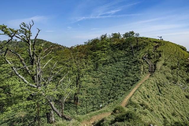 丹沢主脈の稜線登山道と木道の階段の写真
