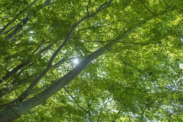 新緑と木漏れ日(丹沢)の写真