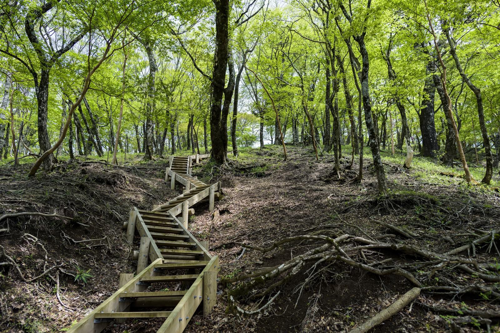 「新緑の登山道(丹沢山中)」の写真