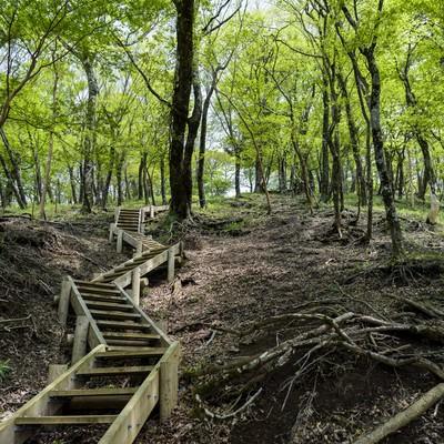 新緑の登山道(丹沢山中)の写真