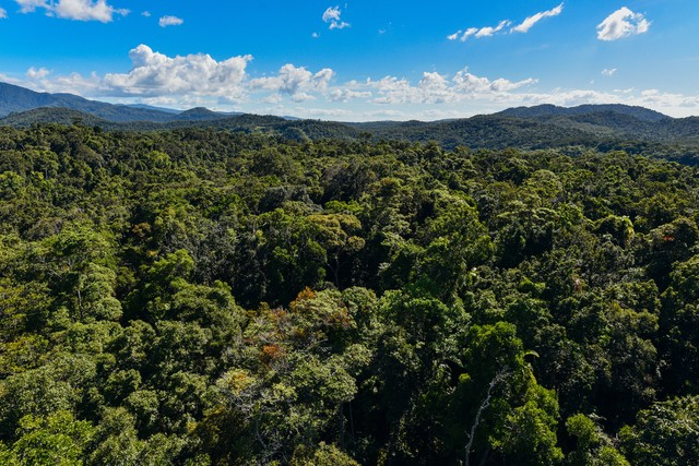 キュランダのジャングル(世界最古)の写真