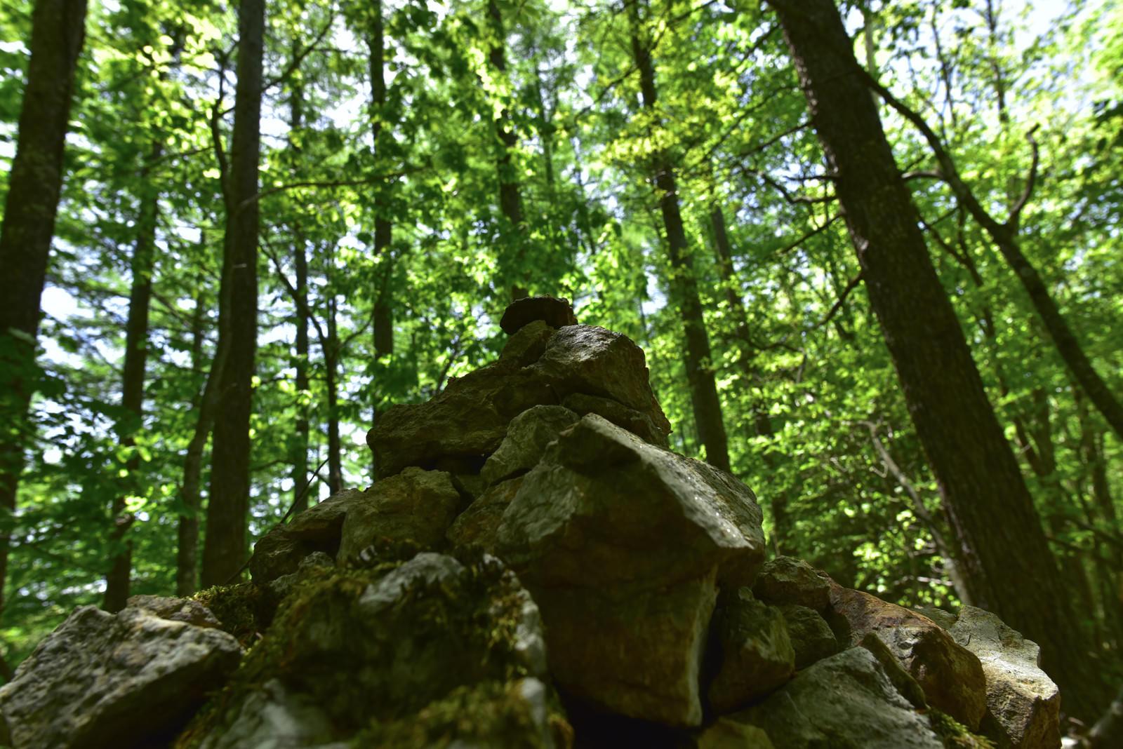 「森の中に積まれたケルン」の写真