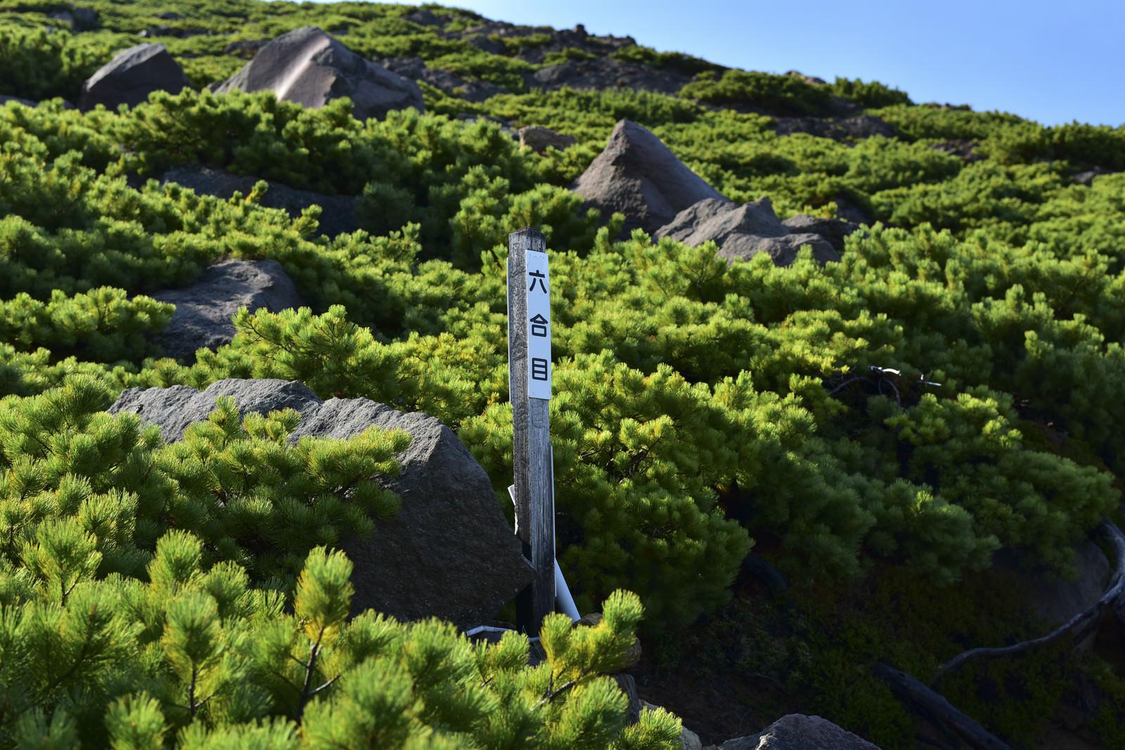 「雌阿寒岳の六合目(北海道釧路市)」の写真