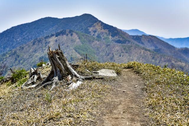 枯れた切り株の向こうにそびえる山々の写真