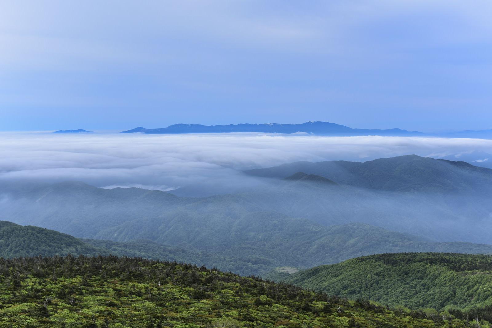 「樹林の奥に広がる滝雲と雲海(蔵王)」の写真