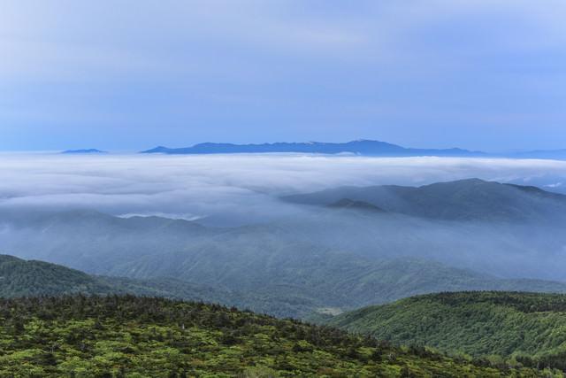 樹林の奥に広がる滝雲と雲海(蔵王)の写真